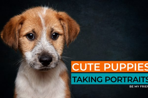 Cute Puppies Taking Portraits